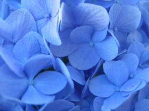 nikko-blue