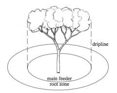 tree-root-zone